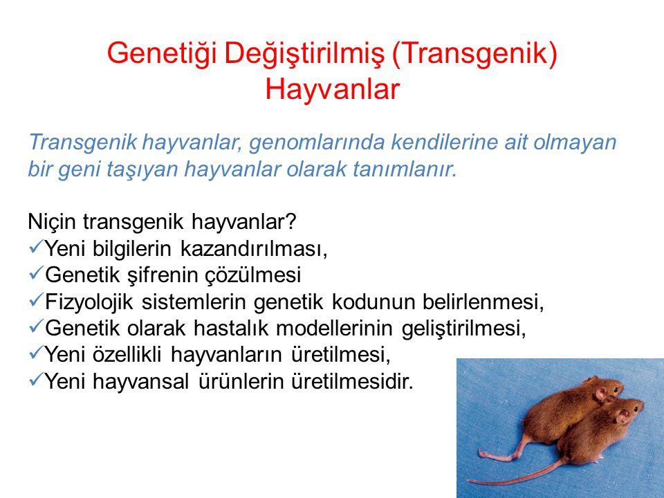 Genetiği Değiştirilmiş (Transgenik)