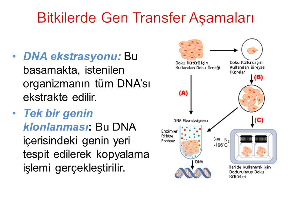 Bitkilerde Gen Transfer Aşamaları