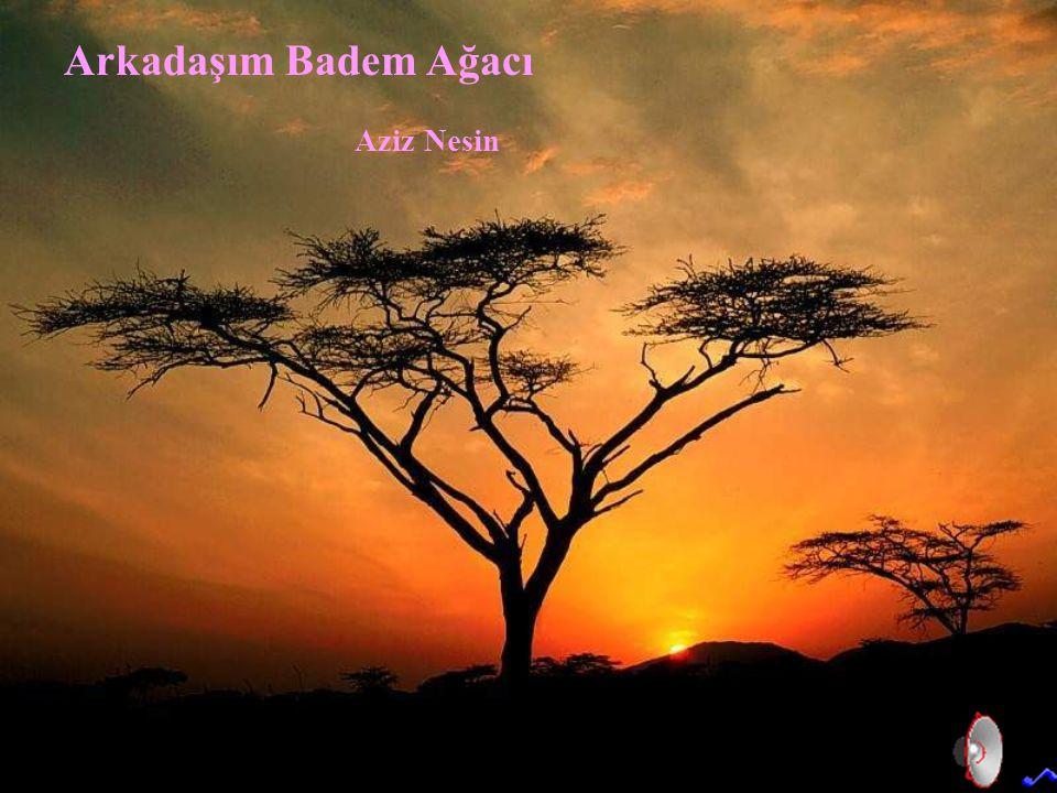 Arkadaşım Badem Ağacı Aziz Nesin