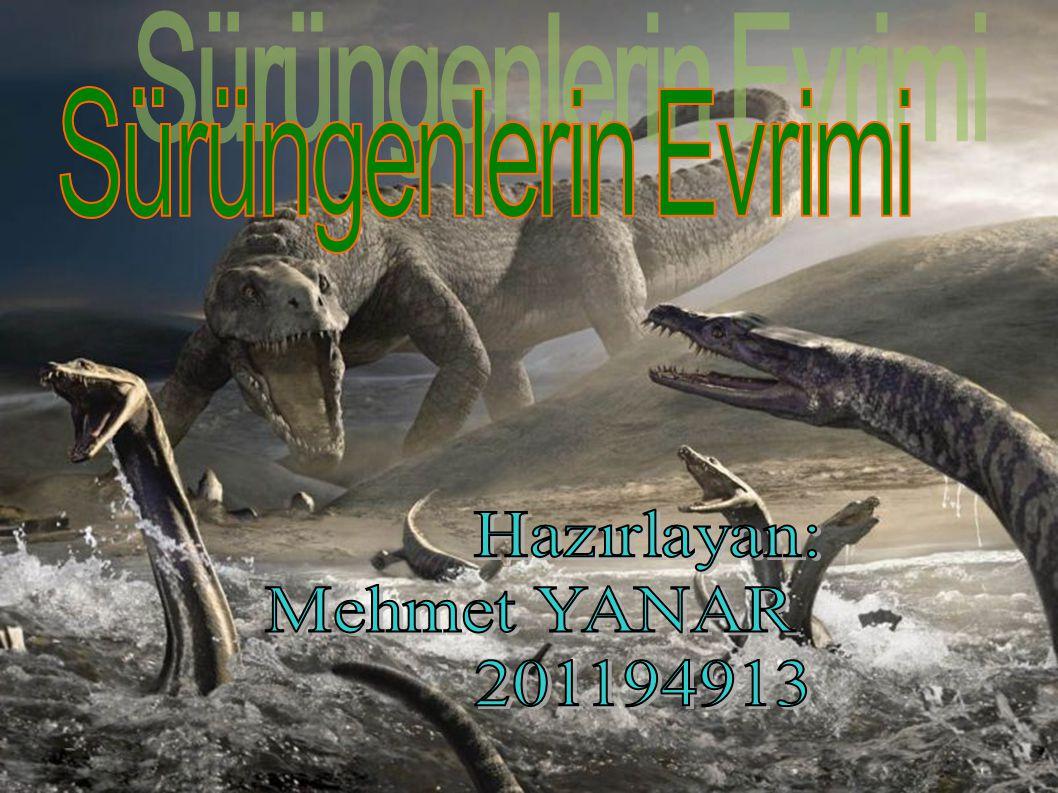 Sürüngenlerin Evrimi Hazırlayan: Mehmet YANAR 201194913