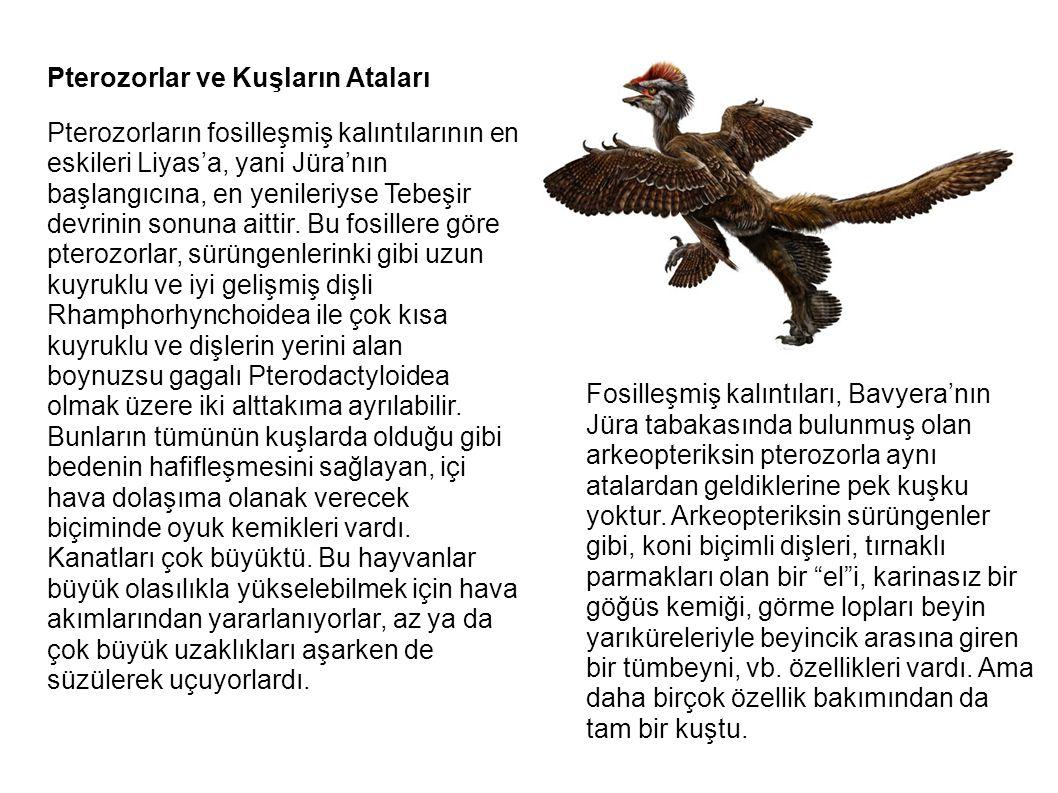 Pterozorlar ve Kuşların Ataları