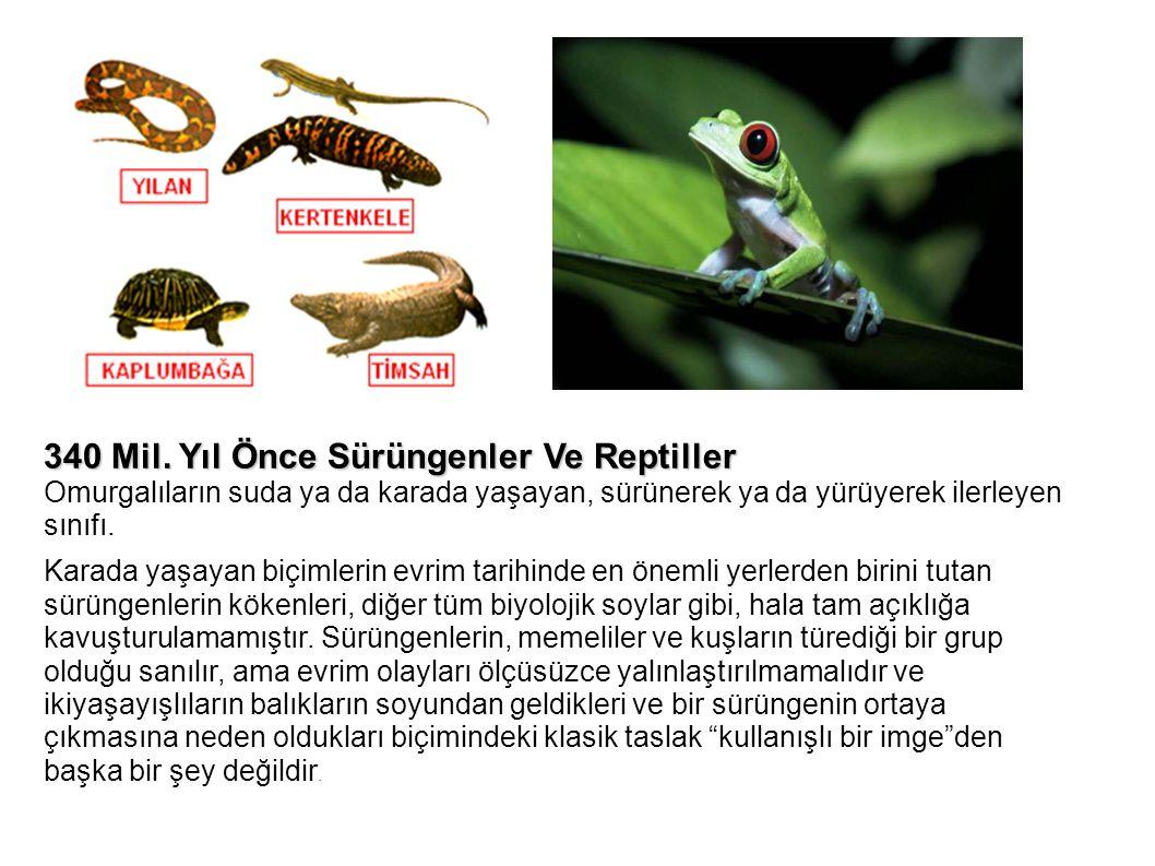 340 Mil. Yıl Önce Sürüngenler Ve Reptiller