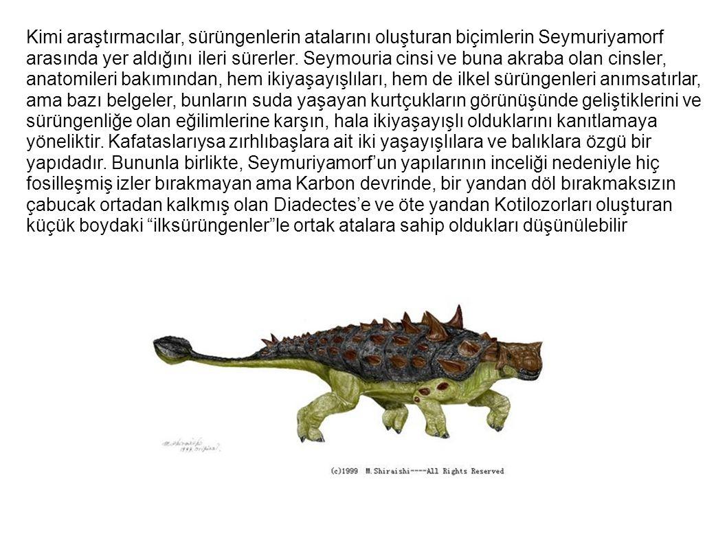 Kimi araştırmacılar, sürüngenlerin atalarını oluşturan biçimlerin Seymuriyamorf arasında yer aldığını ileri sürerler.