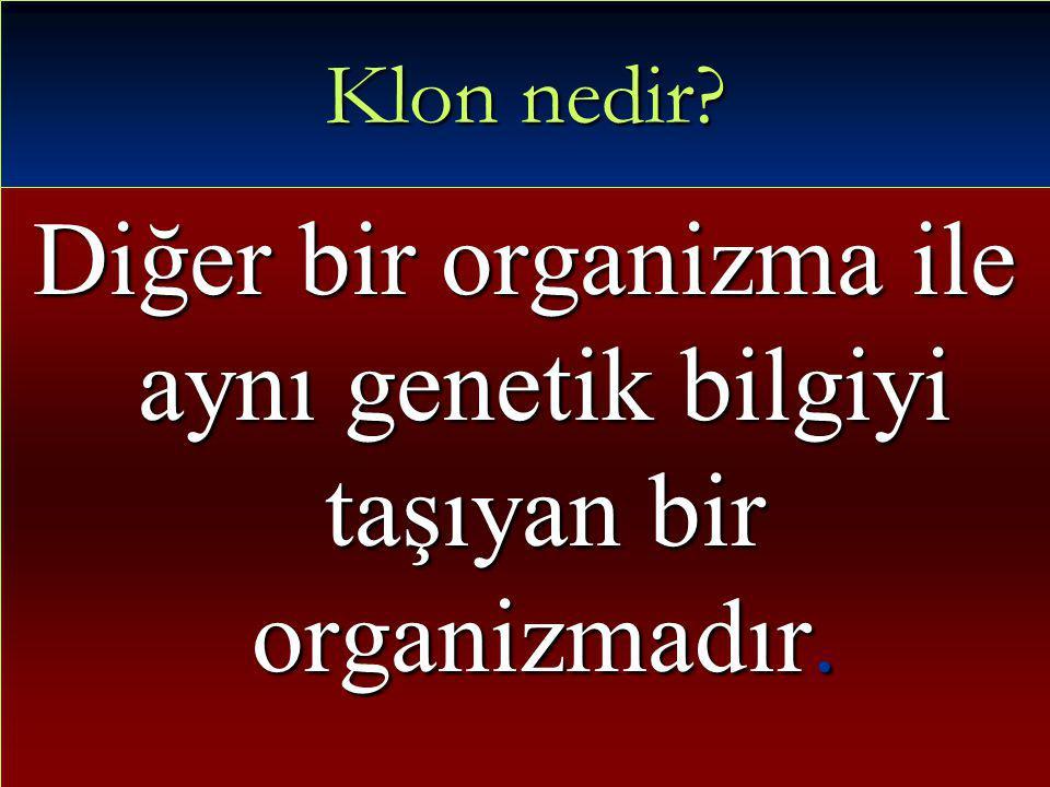 Diğer bir organizma ile aynı genetik bilgiyi taşıyan bir organizmadır.