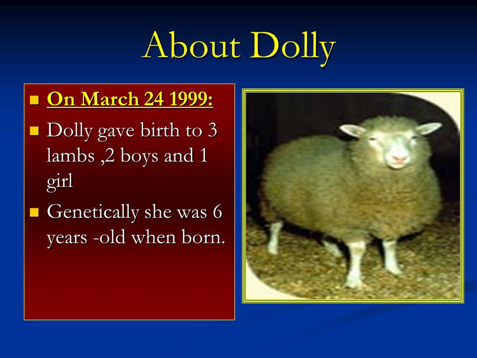 About Dolly On March 24 1999: Dolly gave birth to 3 lambs ,2 boys and 1 girl.