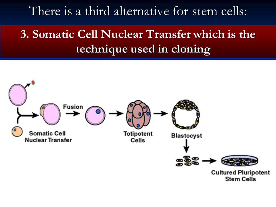 There is a third alternative for stem cells: