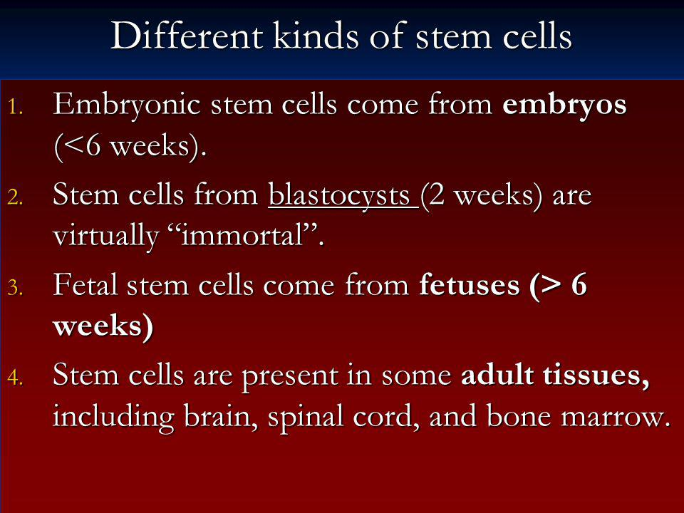 Different kinds of stem cells