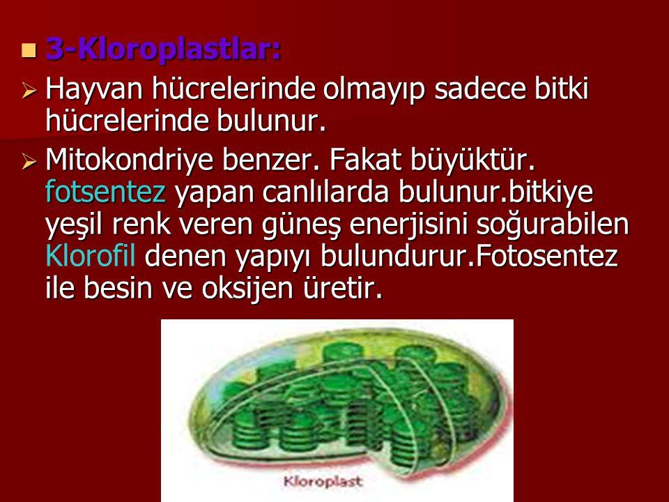 3-Kloroplastlar: Hayvan hücrelerinde olmayıp sadece bitki hücrelerinde bulunur.