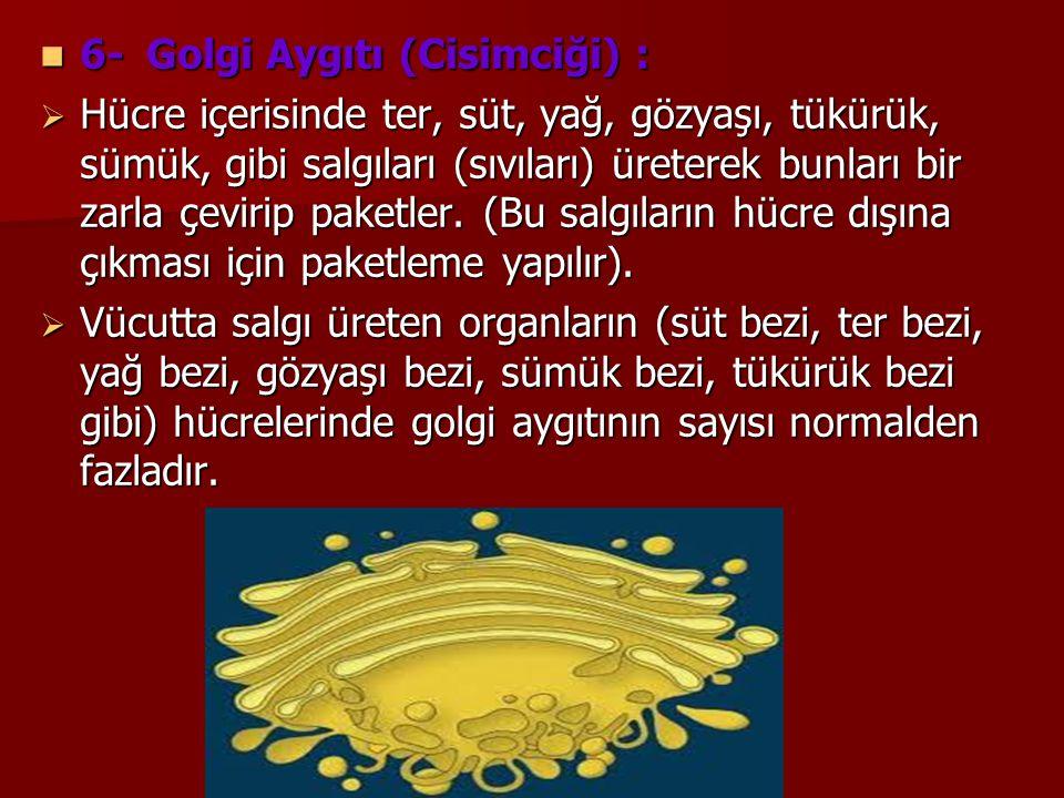 6- Golgi Aygıtı (Cisimciği) :