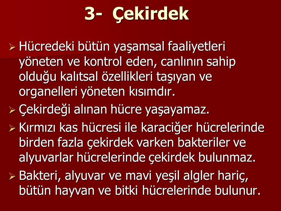 3- Çekirdek