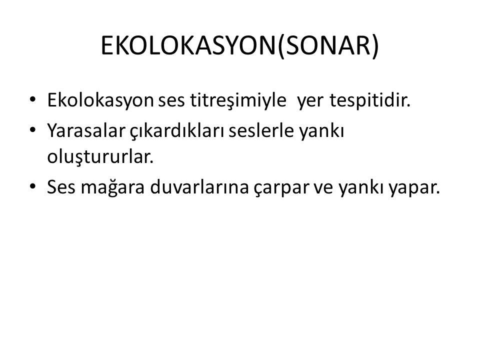 EKOLOKASYON(SONAR) Ekolokasyon ses titreşimiyle yer tespitidir.