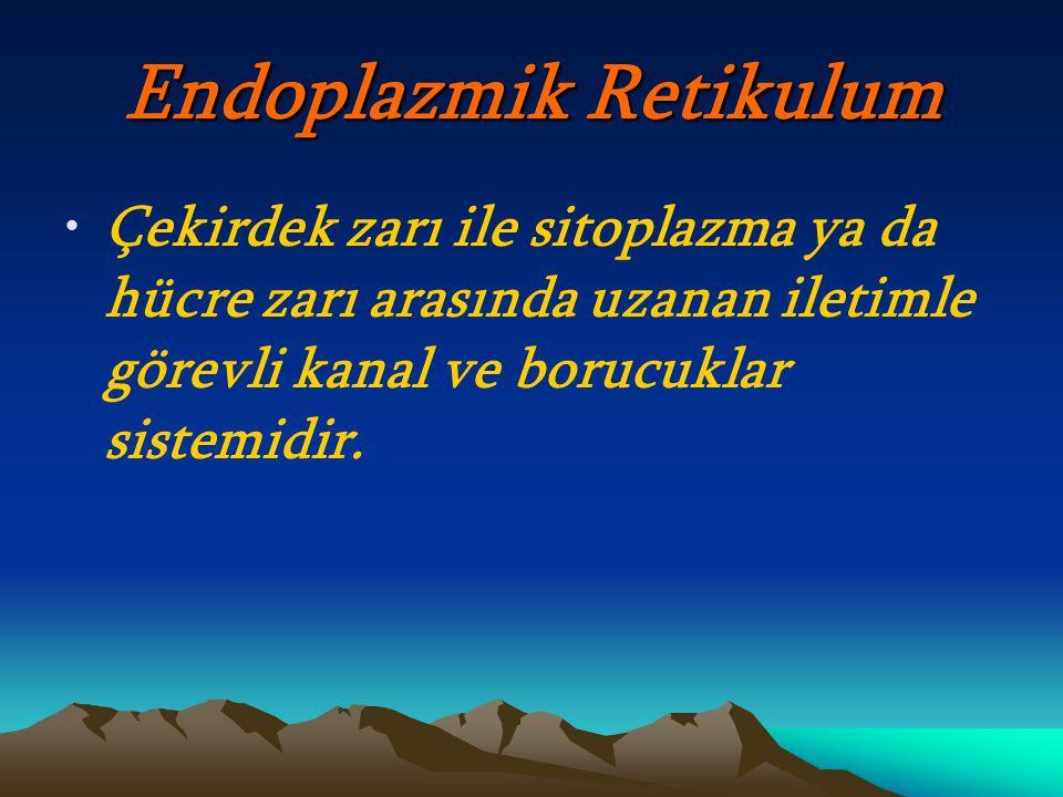 Endoplazmik Retikulum