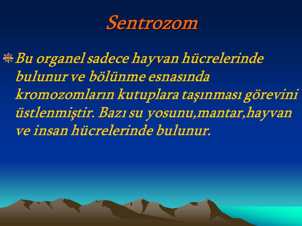 Sentrozom