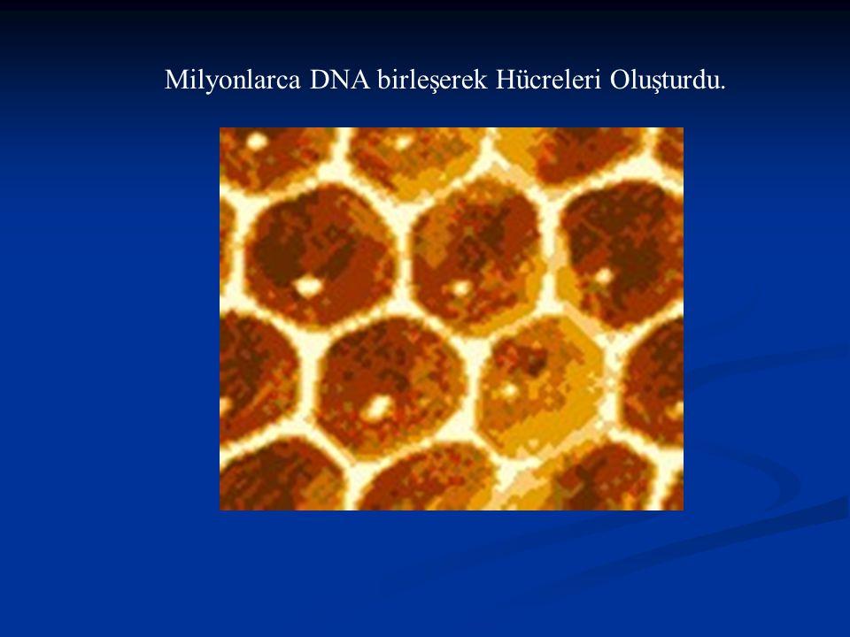 Milyonlarca DNA birleşerek Hücreleri Oluşturdu.