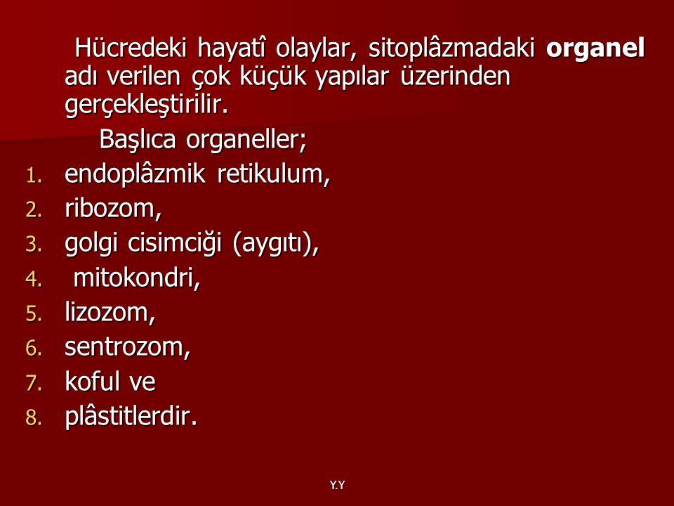 endoplâzmik retikulum, ribozom, golgi cisimciği (aygıtı), mitokondri,