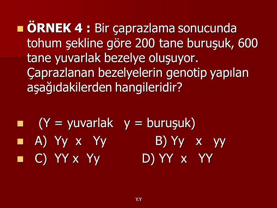 (Y = yuvarlak y = buruşuk) A) Yy x Yy B) Yy x yy C) YY x Yy D) YY x YY
