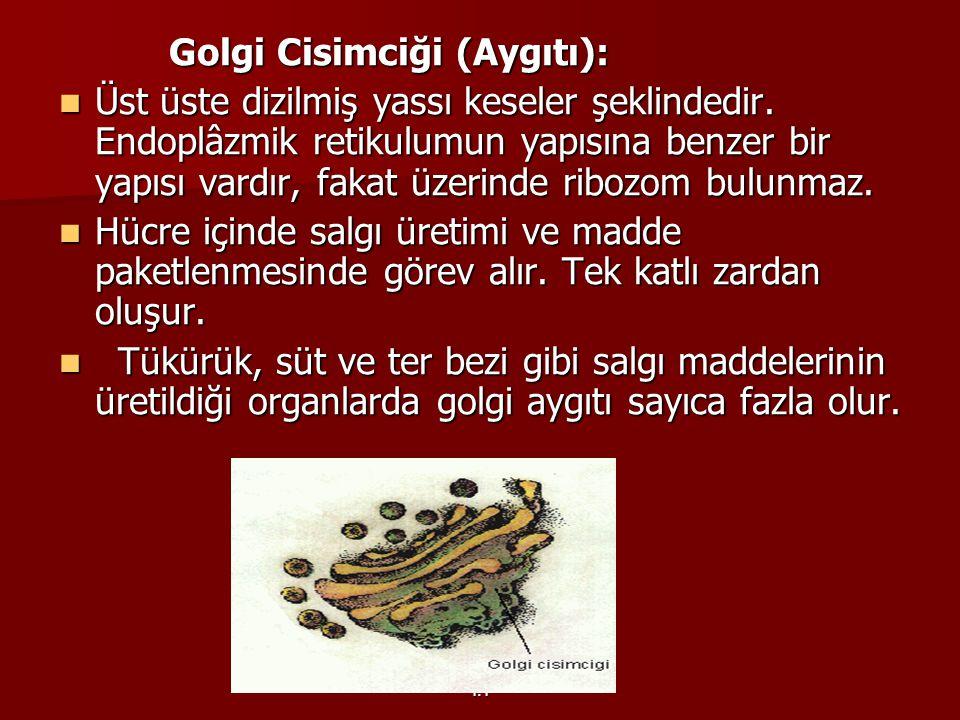 Golgi Cisimciği (Aygıtı):
