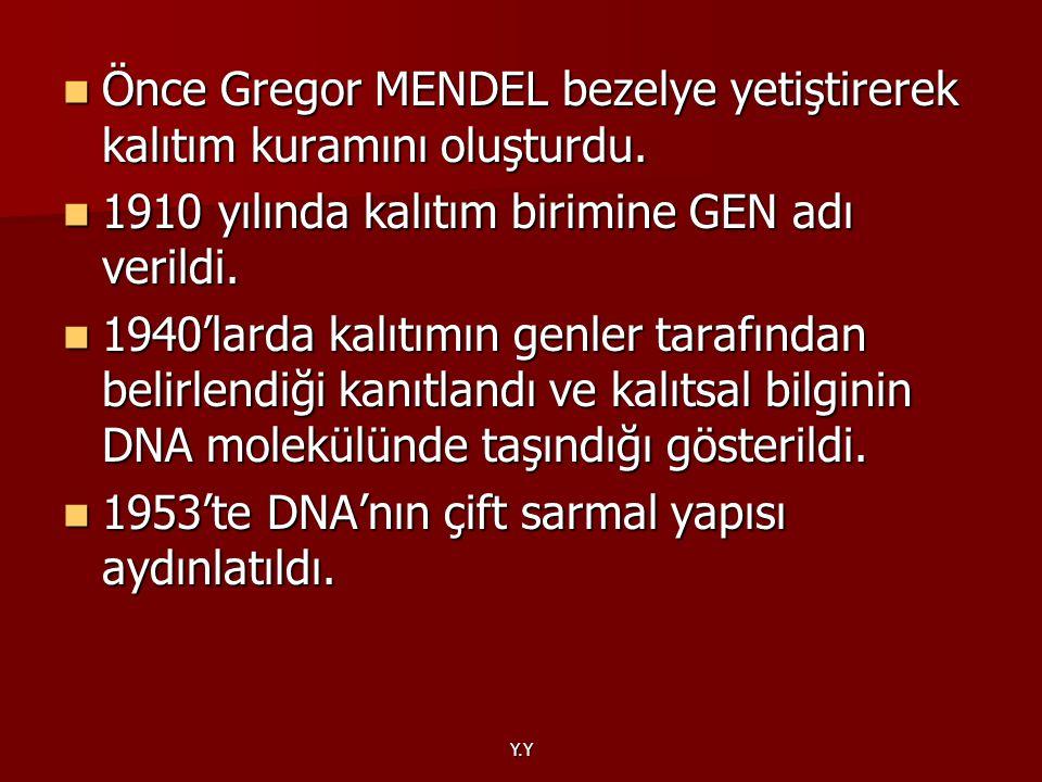 Önce Gregor MENDEL bezelye yetiştirerek kalıtım kuramını oluşturdu.