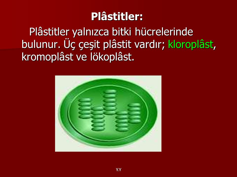 Plâstitler: Plâstitler yalnızca bitki hücrelerinde bulunur. Üç çeşit plâstit vardır; kloroplâst, kromoplâst ve lökoplâst.
