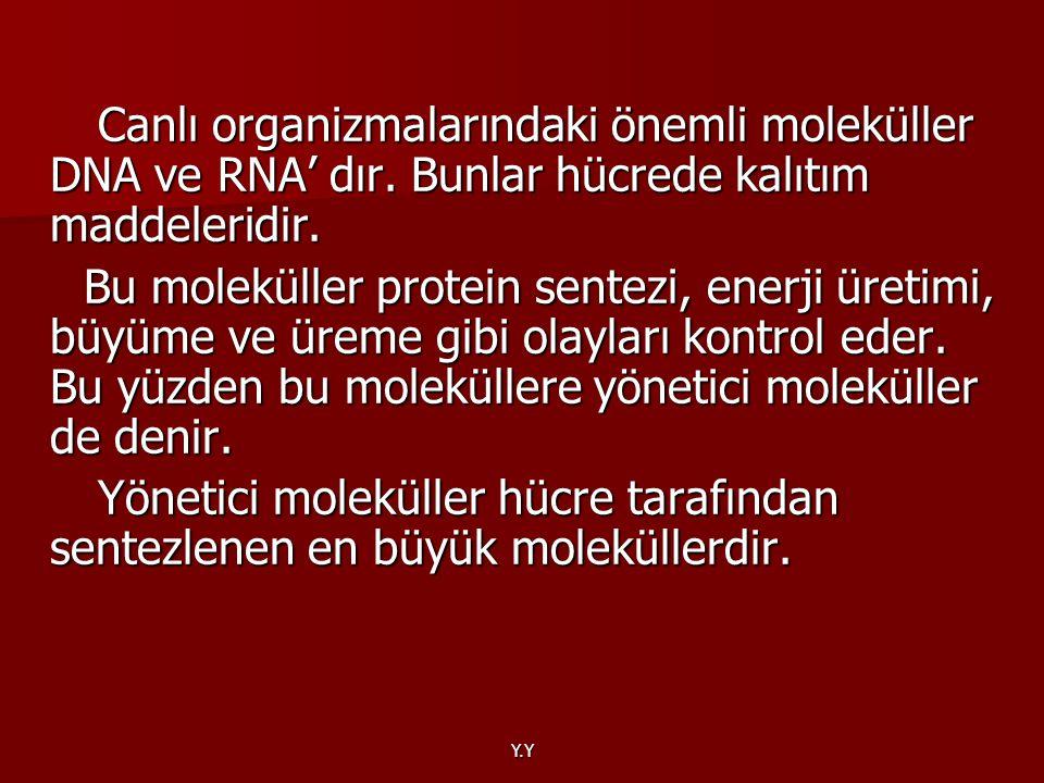 Canlı organizmalarındaki önemli moleküller DNA ve RNA' dır
