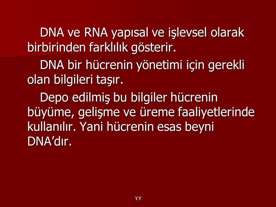 DNA ve RNA yapısal ve işlevsel olarak birbirinden farklılık gösterir.