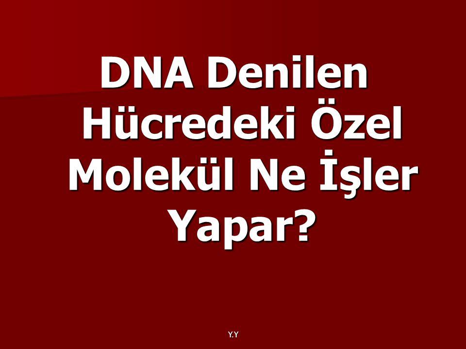 DNA Denilen Hücredeki Özel Molekül Ne İşler Yapar