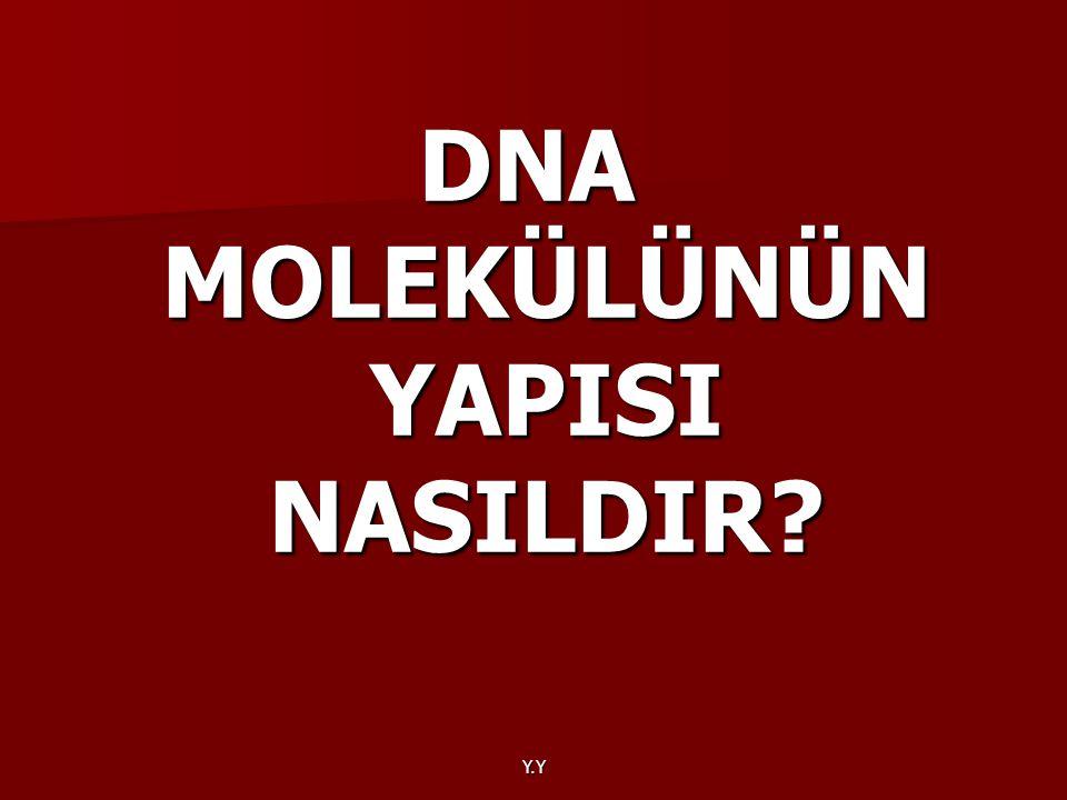 DNA MOLEKÜLÜNÜN YAPISI NASILDIR