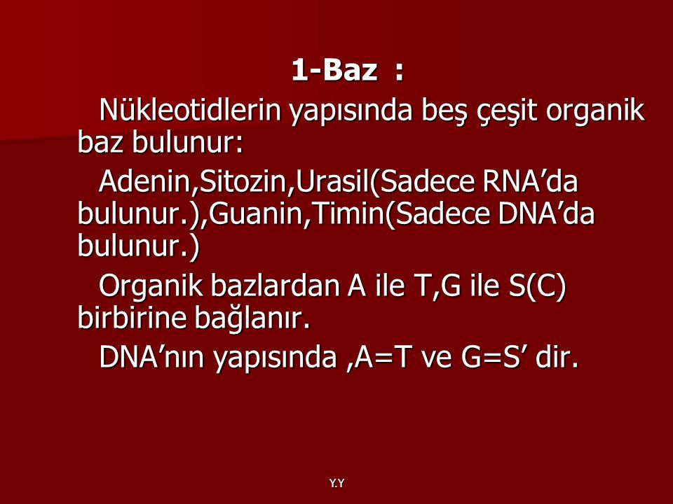 Nükleotidlerin yapısında beş çeşit organik baz bulunur: