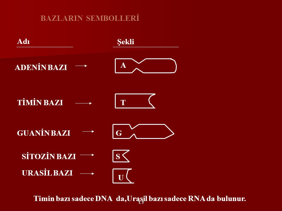 Timin bazı sadece DNA da,Urasil bazı sadece RNA da bulunur.