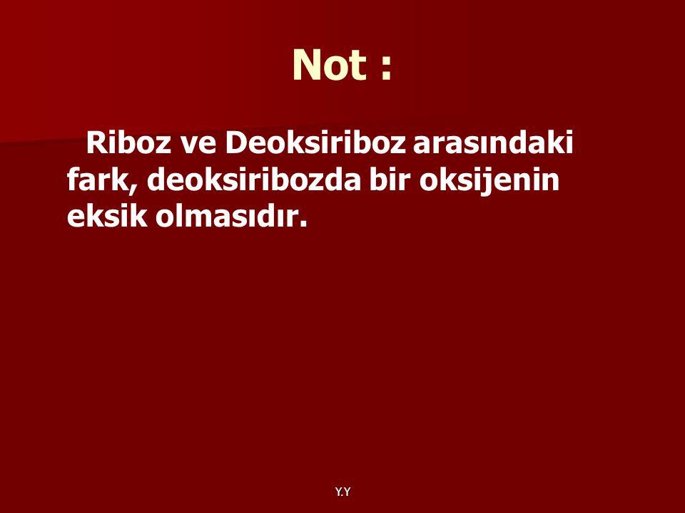 Not : Riboz ve Deoksiriboz arasındaki fark, deoksiribozda bir oksijenin eksik olmasıdır. Y.Y