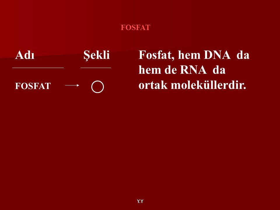 Fosfat, hem DNA da hem de RNA da ortak moleküllerdir.