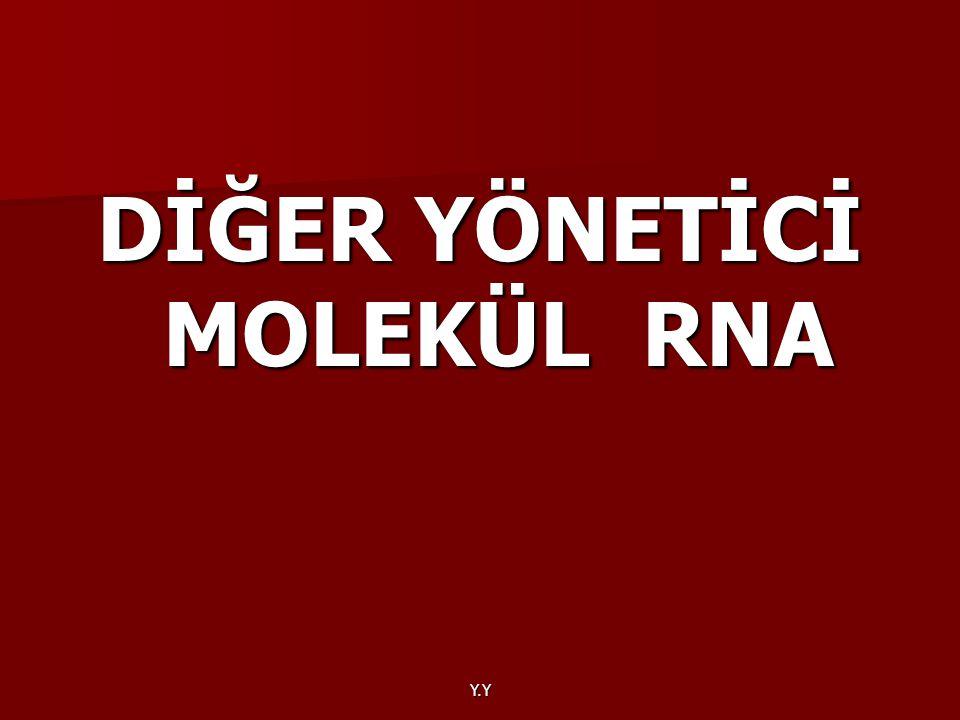 DİĞER YÖNETİCİ MOLEKÜL RNA
