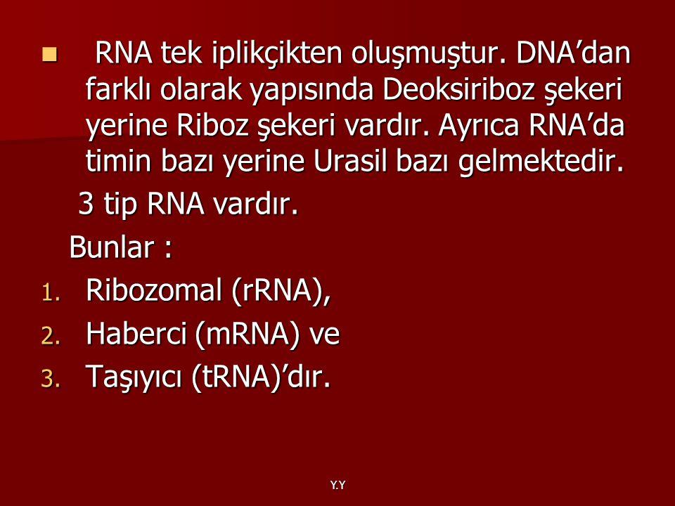 RNA tek iplikçikten oluşmuştur