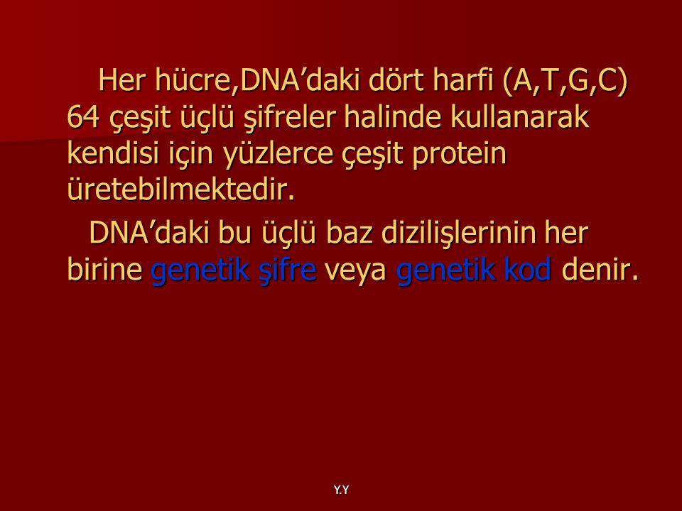 Her hücre,DNA'daki dört harfi (A,T,G,C) 64 çeşit üçlü şifreler halinde kullanarak kendisi için yüzlerce çeşit protein üretebilmektedir.