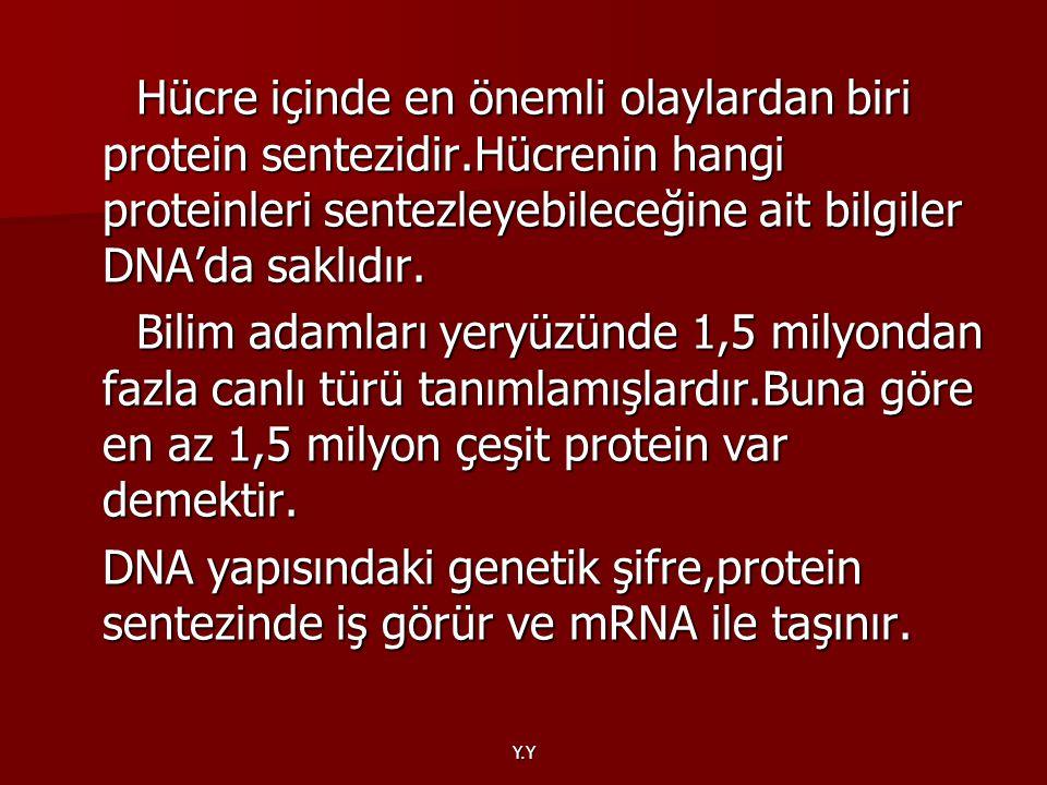 Hücre içinde en önemli olaylardan biri protein sentezidir