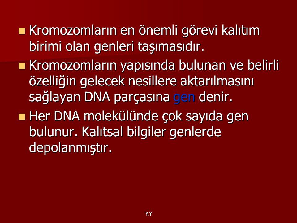 Kromozomların en önemli görevi kalıtım birimi olan genleri taşımasıdır.