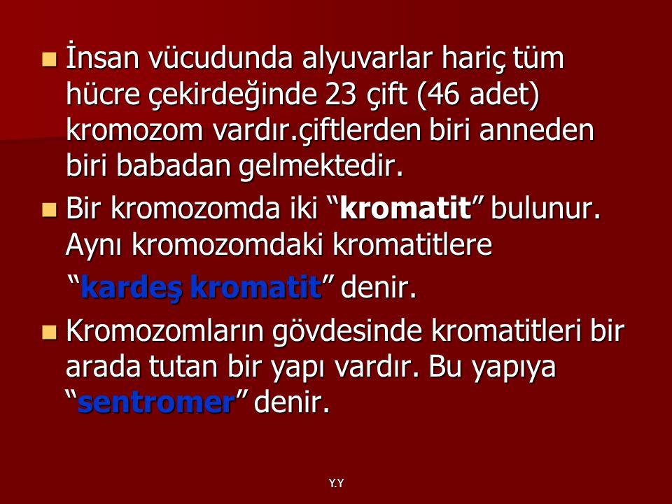 Bir kromozomda iki kromatit bulunur. Aynı kromozomdaki kromatitlere