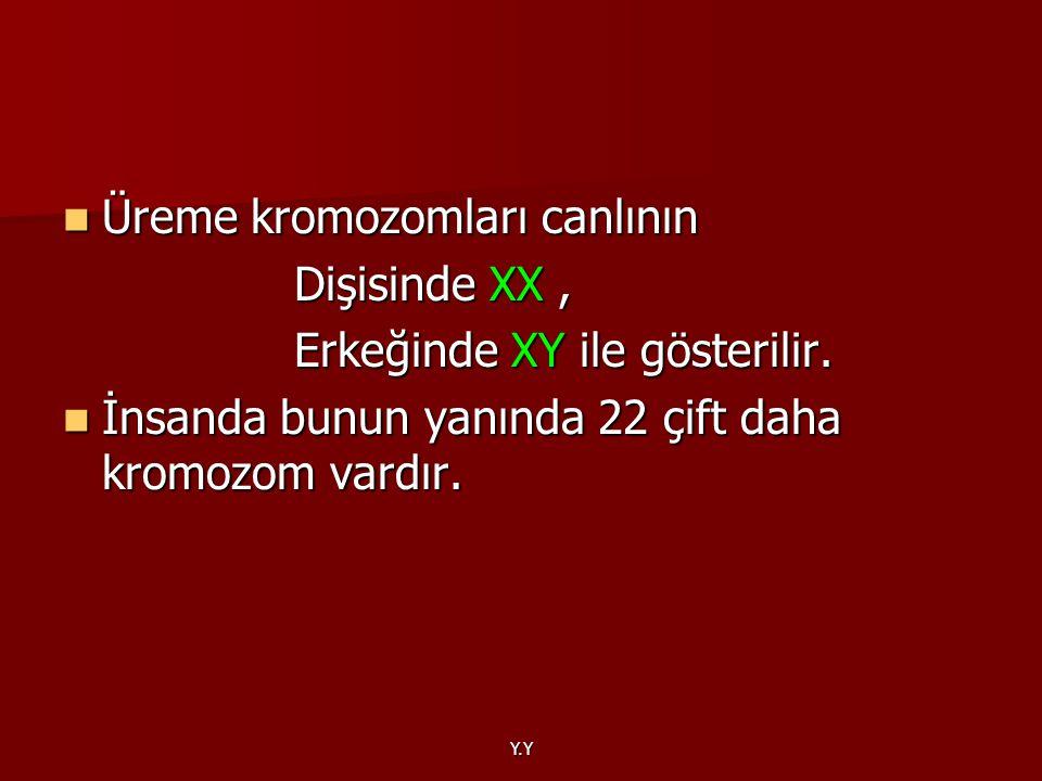 Üreme kromozomları canlının Dişisinde XX ,