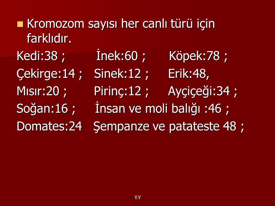Kromozom sayısı her canlı türü için farklıdır.