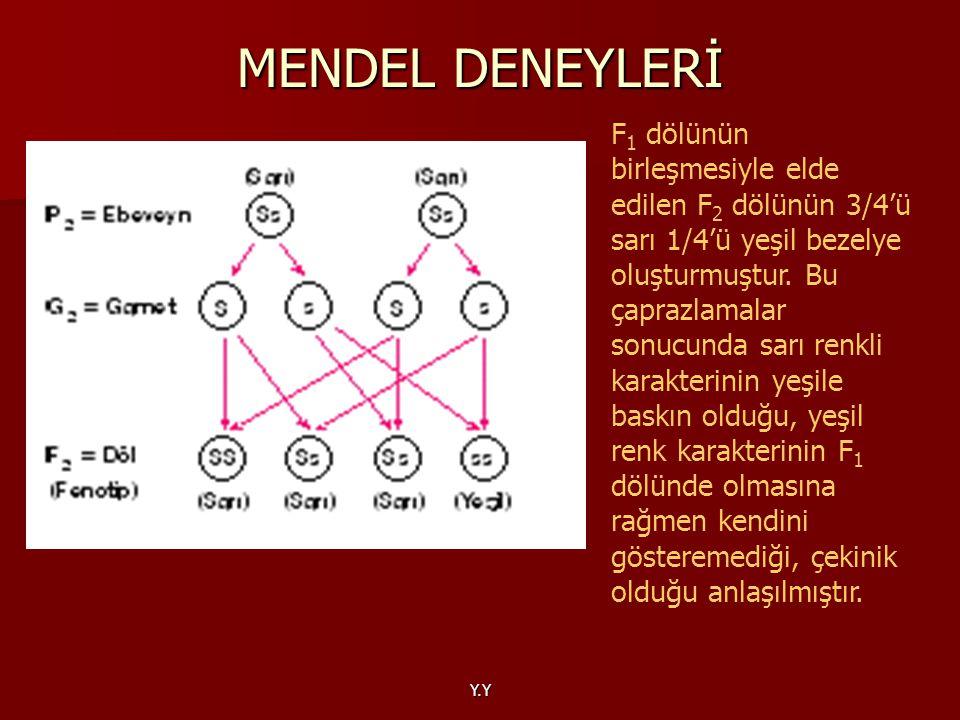 MENDEL DENEYLERİ