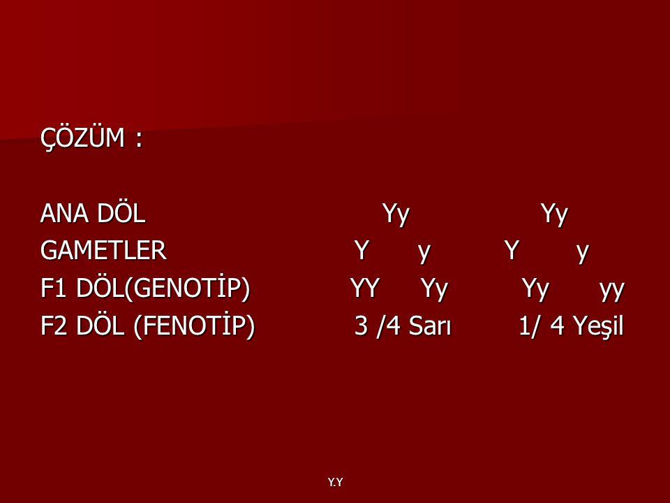 F1 DÖL(GENOTİP) YY Yy Yy yy F2 DÖL (FENOTİP) 3 /4 Sarı 1/ 4 Yeşil
