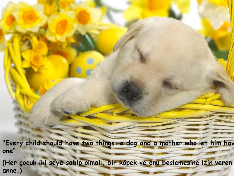 Every child should have two things: a dog and a mother who let him have one