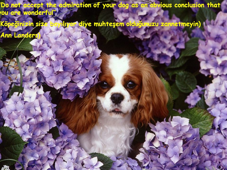 Do not accept the admiration of your dog as an obvious conclusion that you are wonderful