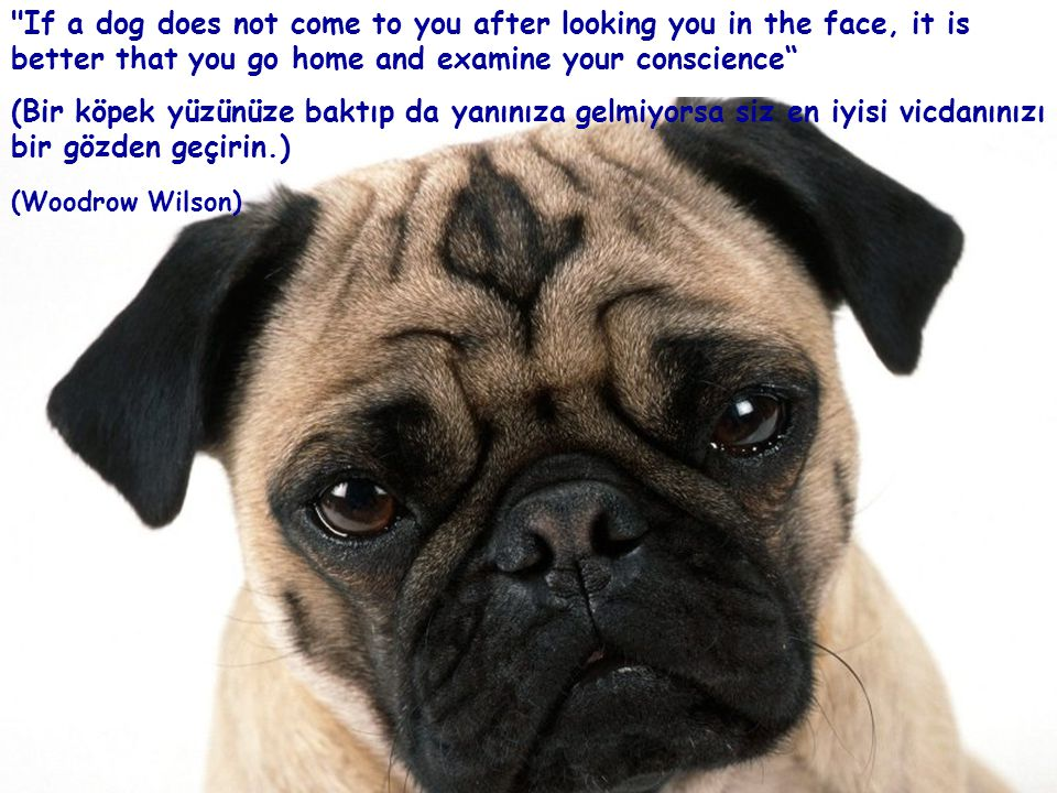 If a dog does not come to you after looking you in the face, it is better that you go home and examine your conscience