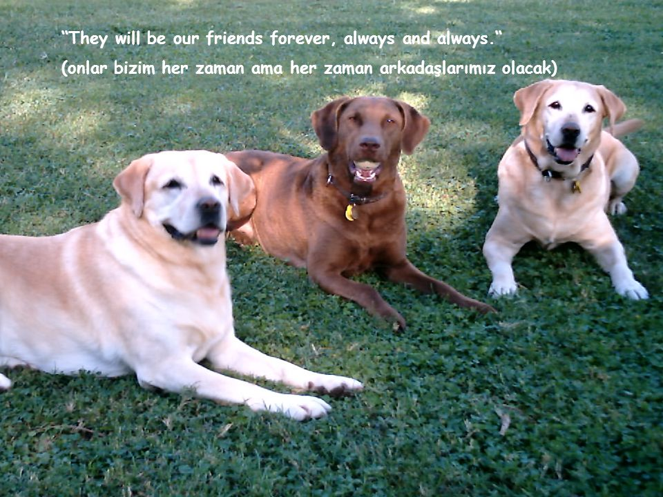 They will be our friends forever, always and always.