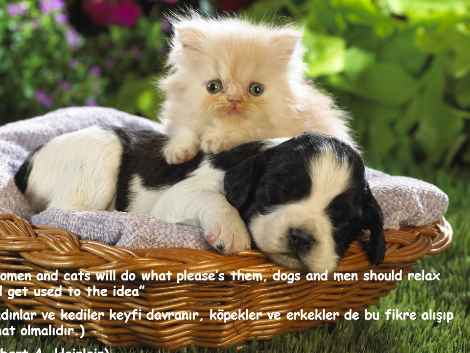 Women and cats will do what please's them, dogs and men should relax and get used to the idea