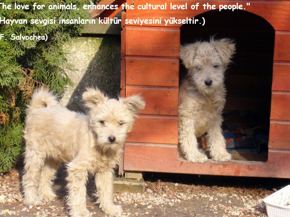 The love for animals, enhances the cultural level of the people.