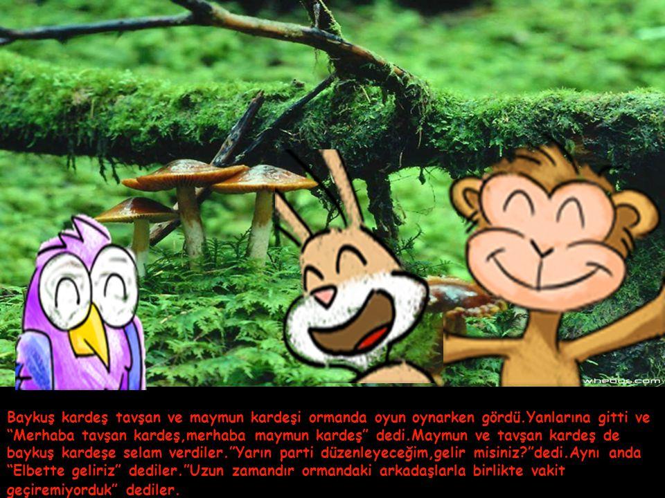Baykuş kardeş tavşan ve maymun kardeşi ormanda oyun oynarken gördü