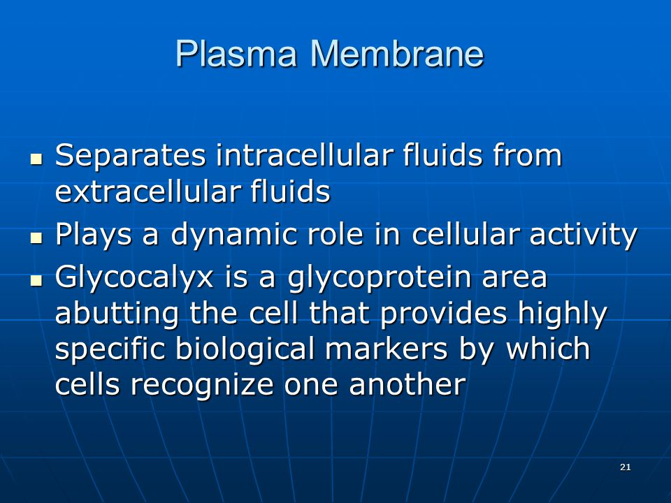 Plasma Membrane Separates intracellular fluids from extracellular fluids. Plays a dynamic role in cellular activity.