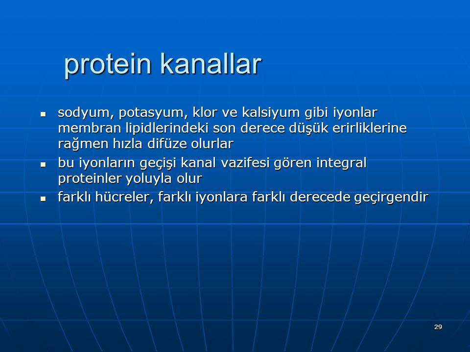 protein kanallar sodyum, potasyum, klor ve kalsiyum gibi iyonlar membran lipidlerindeki son derece düşük erirliklerine rağmen hızla difüze olurlar.